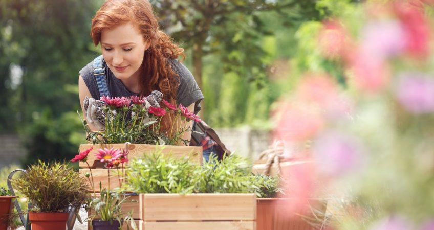 które wybrać kwiaty na taras