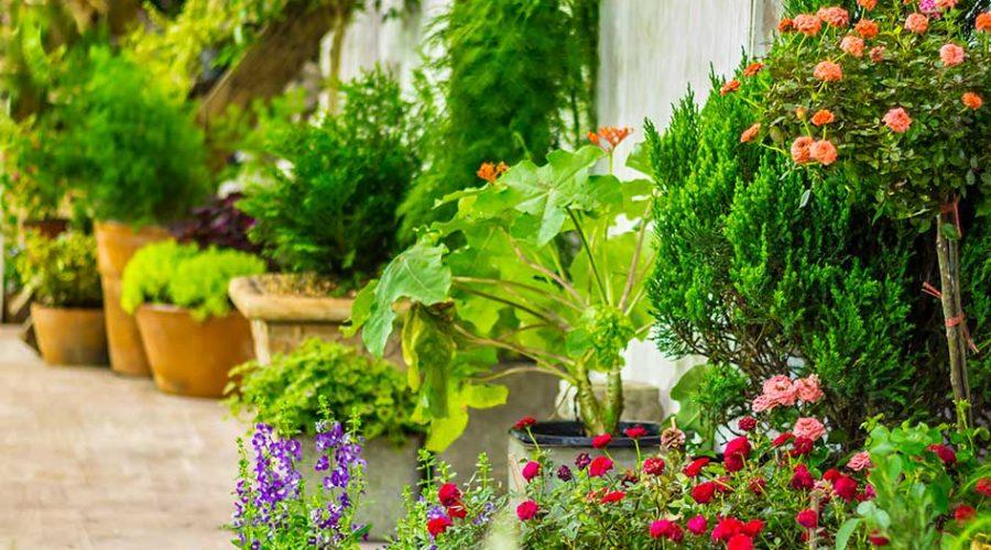 kwiaty na taras obraz 1