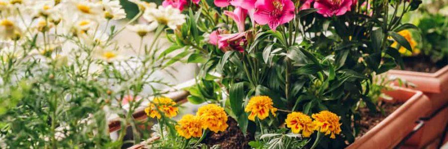 kwiaty na taras obrazek